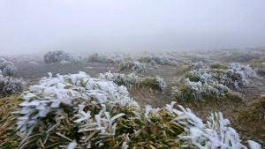 合歡山結霜白了頭 民眾守候盼入夜飄雪