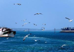 燕鷗、綠蠵龜保育區 澎湖將重新檢討