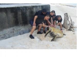 又救綠蠵龜 海巡署今年共救268隻