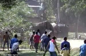 60頭狂象找不到路 踩爛25棟房屋根本擋不住