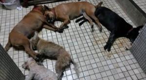 泯滅人性!5條狗被下毒 口吐白沫慘死