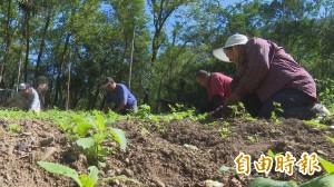部落菜園無毒栽植 提供部落中壯年就業第二春