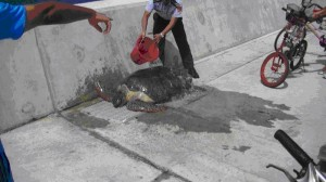 太平島迷途綠蠵龜  海巡署救援野放