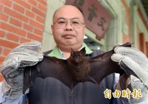 解謎台灣蝙蝠迷航 台師大:吃太多重金屬農藥