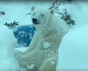 今天不接客!動物園因大雪關閉 放下雪假的牠們玩超嗨!