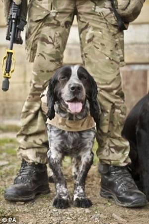 為國奉獻卻晚景淒涼 英軍被爆處死退伍軍用犬