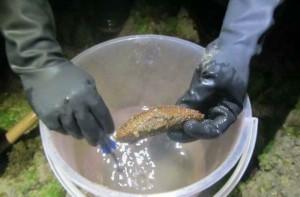 鑿墾丁珊瑚抓海參被逮 辯稱「為了觀察」