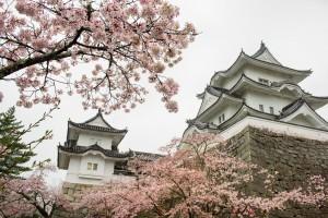 外來天牛入侵 日本櫻花恐在數十年內消失