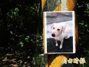陸戰隊營區造冊犬隻共57隻 將協請專家結紮