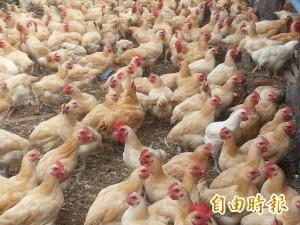魚也會中禽流感? 農委會:無科學根據