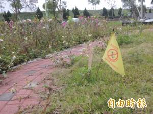 防堵紅火蟻成效有限 竹北人口密集區多處淪陷