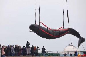 口中挖出一堆垃圾 擱淺抹香鯨「一屍兩命」