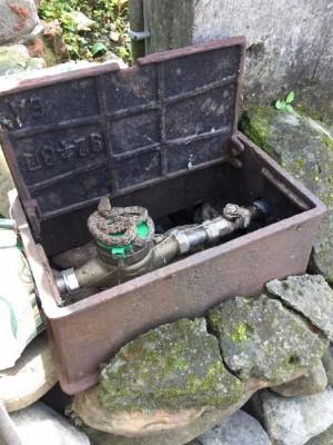 水公司查水表 竟然查到龜殼花