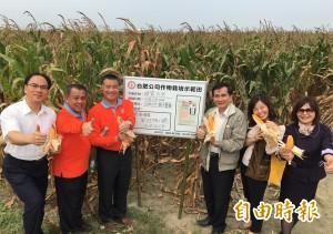 新肥料試種鹽水玉米效果不錯  農民:能降價更好