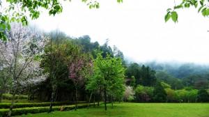 4月連假遊奧萬大和泰雅渡假村 12歲以下兒童免費