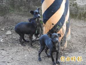 《動保法》三讀通過  吃貓、狗肉最高可罰25萬元