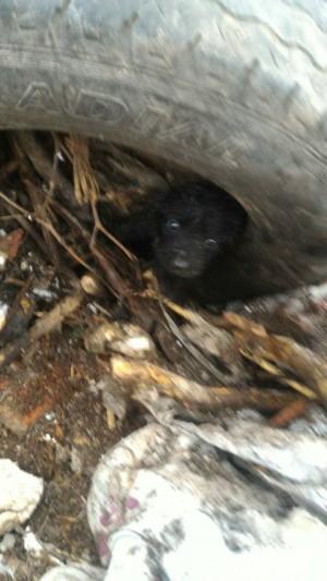 垃圾場淪棄犬煉獄 遭埋幼犬嗚咽獲救