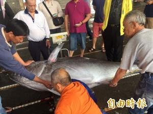 宜蘭第一鮪現身 捕獲208公斤黑鮪魚