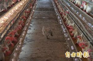 追查戴奧辛雞蛋流向 食藥署不排除散布全台