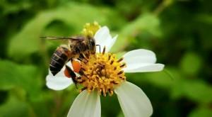 大雨亂蜜期 蜂農嘆受益一年不如一年