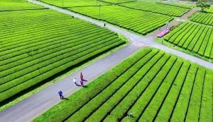 中客不來濟州島   南韓黃金長假人潮只少0.7%