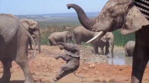 大象空拋小象 霸凌竟是為了性愛