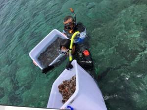 南方四島放流海膽 全面復育海洋資源