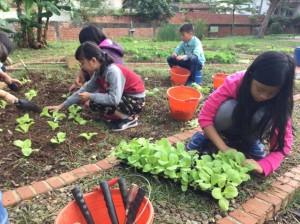 福龍國小太極八卦菜畦 採自然農法好健康