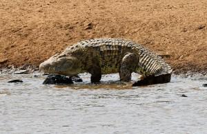牧師表演水上行走神蹟  信徒目睹他被3鱷分食