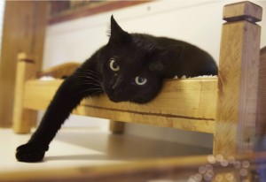 不算偷懶啦!研究:上班看貓咪影片好處多