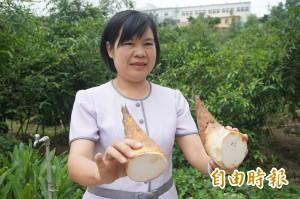 正值盛產期   挑選好吃的綠竹筍訣竅