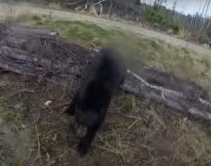 心驚膽跳! 黑熊襲擊獵人 清晰畫面全都錄