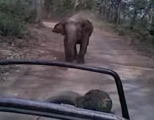 遊客太興奮惹惱大象   象媽媽火大追車