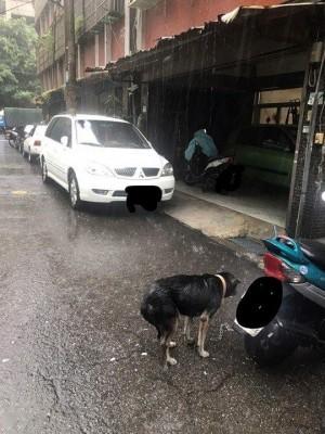 飼主讓狗狗沖「暴雨澡」 網友怒投訴