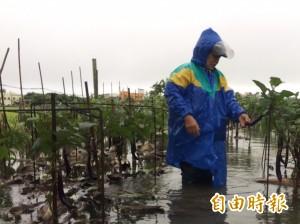 暴雨重創雲林溪北蔬菜產區 菜價恐飆