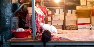 3隻貓咪闖豬肉攤「踩肉狂嗑」 網友直呼好噁心!