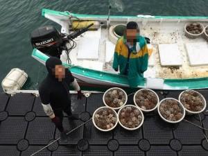 馬糞海膽開放前夕  澎湖再查獲漁民偷跑