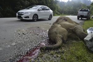 小象闖高速公路 慘遭「路殺」
