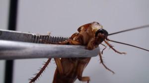 少年長年自慰射牆壁 竟生出大量蟑螂...