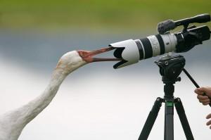 吹冷氣賞鳥不必曬太陽 250種名禽一次看個夠