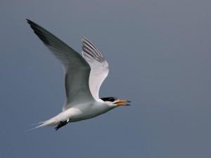 「神話之鳥」全球不到百隻 追10年找到遷徙路徑