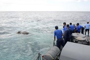 大海發現大象! 斯里蘭卡海軍助牠奇蹟脫逃