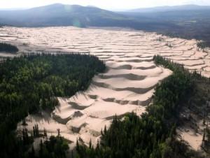 地球病了?美國阿拉斯加雪地與針葉林竟變沙漠...