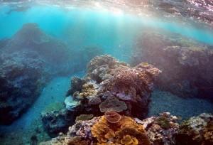 全球暖化加劇!世界最北珊瑚礁也白化了...