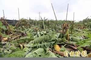 雙颱過境農損破3億 香蕉、蔥損失最大