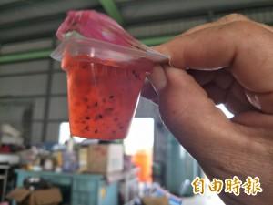 忍住寂寞推有機農業 4年後她的火龍果凍外銷日本