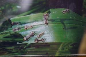 蟲害毀檳榔樹 她用這招誘殺上百隻成蟲