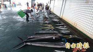 天鴿將襲 台東富岡漁市場拍賣漁獲只剩3分之1