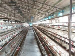 毒蛋風暴銷量應聲跌3成 蛋農、蛋商跳腳