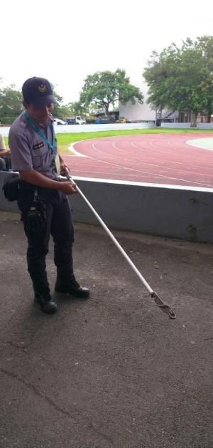 世大運場館毒蛇亂入  警「逮捕」放生